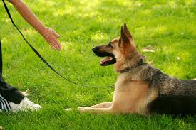 Questions About Dog Training? Here Are Some Answers