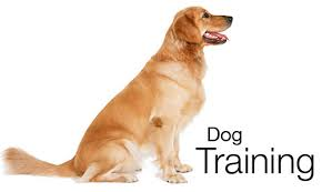 Sanity Saving Tips For Training Your Dog Today!