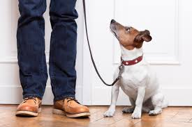 A Few Ideas To Discourage Your Dog From Eating Poop