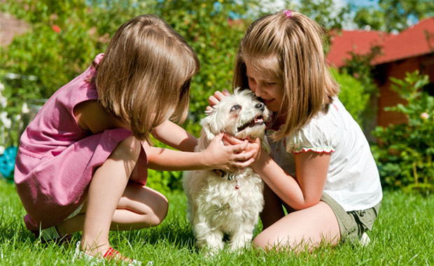 tips on caring for dogs at home